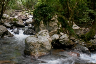 The Argentino torrent