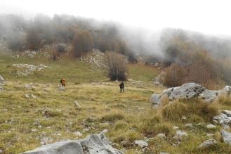 Bosco del Pollinello