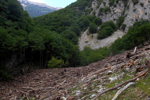 Result of an avalanche (close to Bocca dei Valloni, 2015)