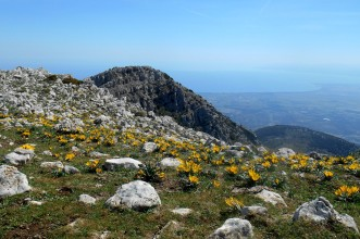 Monte Panno Bianco (from Monte Sellaro)